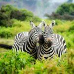 wildlife spotten